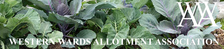 header cabbage text